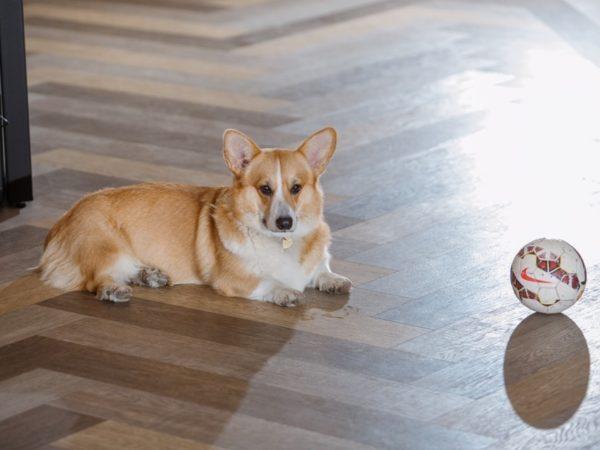 Почему кнам настудию можно приходить сдомашними животными?